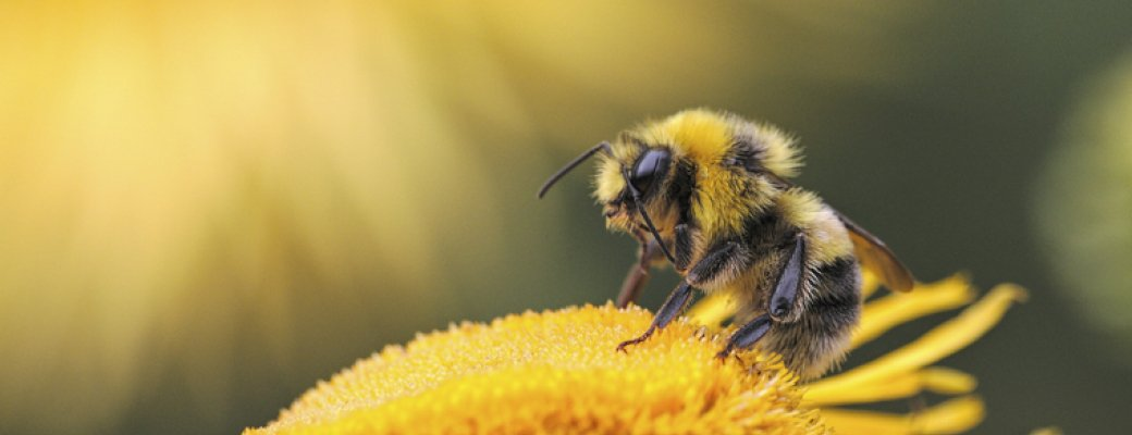 Honey bees bring more