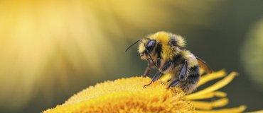 Honingbijen helpen mee