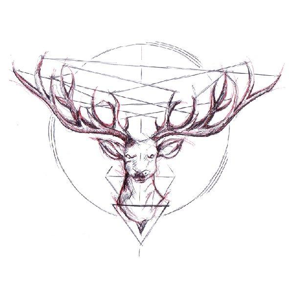 Deer - Jan Poncelet